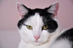A Cat Cover